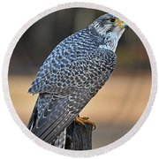 Peregrine Falcon Perched Round Beach Towel