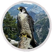 Peregrine Falcon, Yosemite Valley, Western Sierra Nevada Mountain, Echo Ridge Round Beach Towel