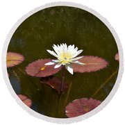 Perfect Lily  Round Beach Towel