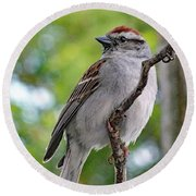 Perfect Profile - Chipping Sparrow Round Beach Towel
