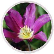 Perfect Single Dark Pink Tulip Flower Blossom Blooming Round Beach Towel