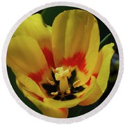 Perfect Yellow And Red Flowering Tulip In A Garden Round Beach Towel