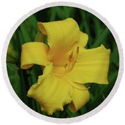Perfect Yellow Daylily Flowering In A Garden Round Beach Towel
