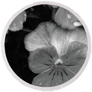 Perfectly Pansy 12 - Bw - Water Paper Round Beach Towel