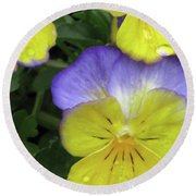Perfectly Pansy 12 Round Beach Towel