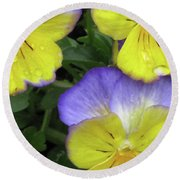 Perfectly Pansy 14 Round Beach Towel