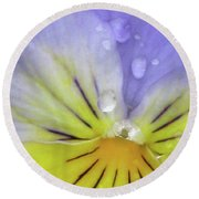 Perfectly Pansy 16 Round Beach Towel