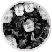 Perfectly Pansy 18 - Bw - Water Paper Round Beach Towel