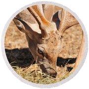 Persian Fallow Deer Round Beach Towel