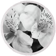 Peruvian Lilies  Flowers Black And White Print Round Beach Towel