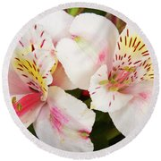 Peruvian Lilies  Flowers White And Pink Color Print Round Beach Towel