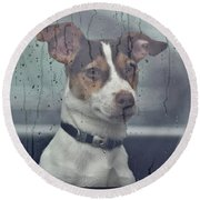 Pet Looking Out Car Window On Rainy Day Round Beach Towel