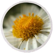 Petals And Pollen Round Beach Towel