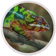 Ambilobe Panther Chameleon Round Beach Towel