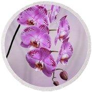 Phalaenopsis Lianher Happy Dancer Round Beach Towel