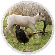 Pheasant And Lamb Round Beach Towel