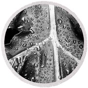 Philodendron Rain - Bw Round Beach Towel