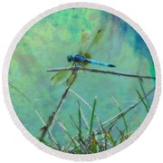 Photo Painted Dragonfly Round Beach Towel