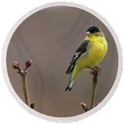 Lesser Goldfinch Round Beach Towel