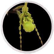 Phragmipedium Richteri Orchid Round Beach Towel