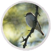 Pied Flycatcher 1 Round Beach Towel