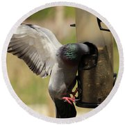 Pigeon And Feeder Wings Spread Round Beach Towel