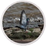 Pigeon With Its Wings Up Round Beach Towel
