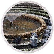 Pigeons Are In The Fountain Refreshes Round Beach Towel