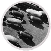 Pigs Being Corralled Round Beach Towel