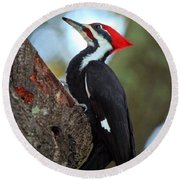 Pilated Woodpecker Round Beach Towel