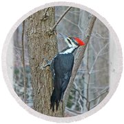 Pileated Woodpecker - Dryocopus Pileatus Round Beach Towel