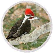 Pileated Woodpecker 6073 Round Beach Towel