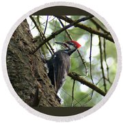 Pileated Woodpecker Round Beach Towel