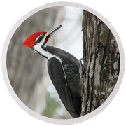 Pileated Woodpecker In Spring Round Beach Towel