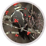 Pileated Woodpecker Lunch Round Beach Towel
