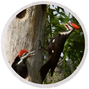 Pileated Woodpecker Ready To Fledge Round Beach Towel