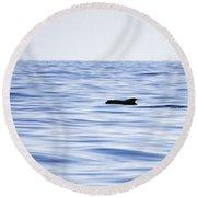 Pilot Whales 2 Round Beach Towel
