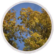 Pin Oaks In The Fall No 1 Round Beach Towel