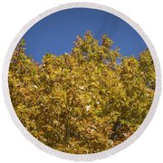 Pin Oaks In The Fall No 2 Round Beach Towel