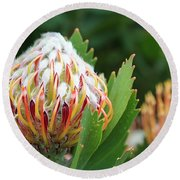 Pincushion Protea Round Beach Towel