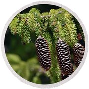 Pine Cones On The Bough Round Beach Towel