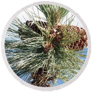 Pine Cones Over Lake Tahoe Round Beach Towel