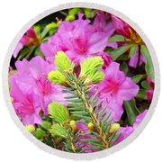 Pine Conifer Art Print Pink Azaleas Flower Garden Baslee Troutman Round Beach Towel