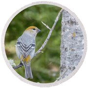 Pine Grosbeak Round Beach Towel