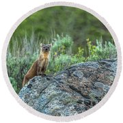 Pine Marten With Attitude Round Beach Towel