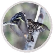 Pine Siskins Fighting 6829 Round Beach Towel