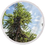 Pine Tree Alive Round Beach Towel