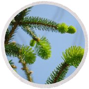 Pine Tree Branches Art Prints Blue Sky Botanical Baslee Troutman Round Beach Towel