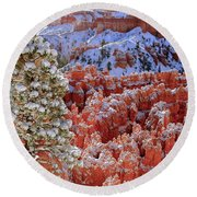 Pine Tree In Bryce Canyon Round Beach Towel
