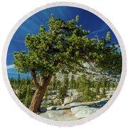 Pine Tree In Yosemite Round Beach Towel